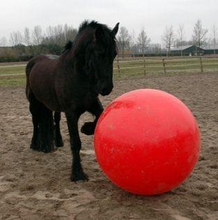 Paardenvoetbal 120 cm.
