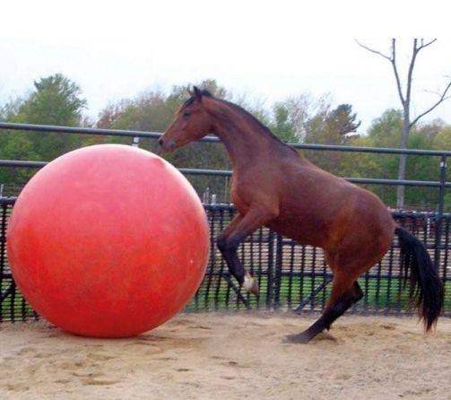 Paardenvoetbal 95 cm.